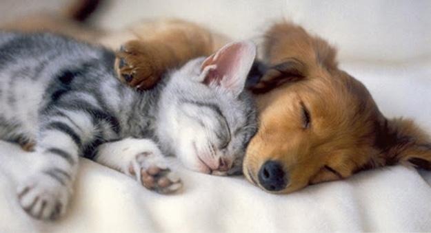 cachorro e gato_