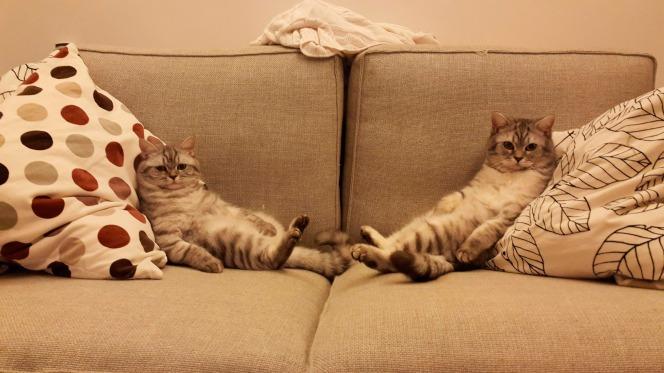 gato-no-sofá