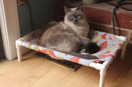 cama de gato_1