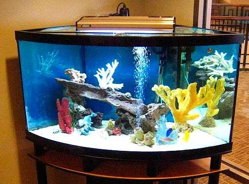 aquario-em-casa_1