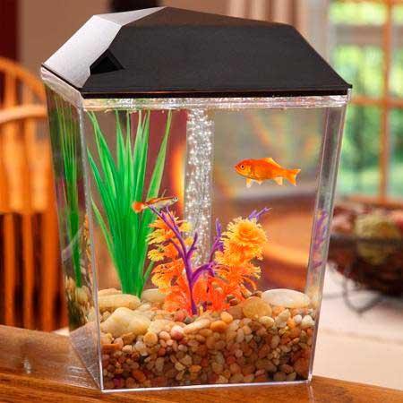 aquario-em-casa_3