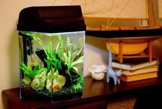 aquario-em-casa_5