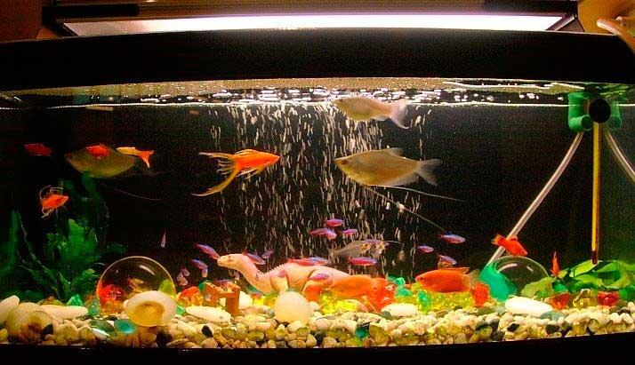 aquario-em-casa_7