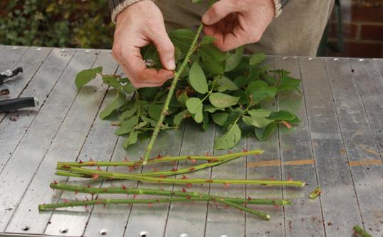 plantando flor na batata